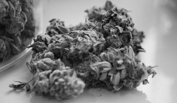 Narkosalg frifundet
